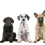 子犬の成長過程の画像